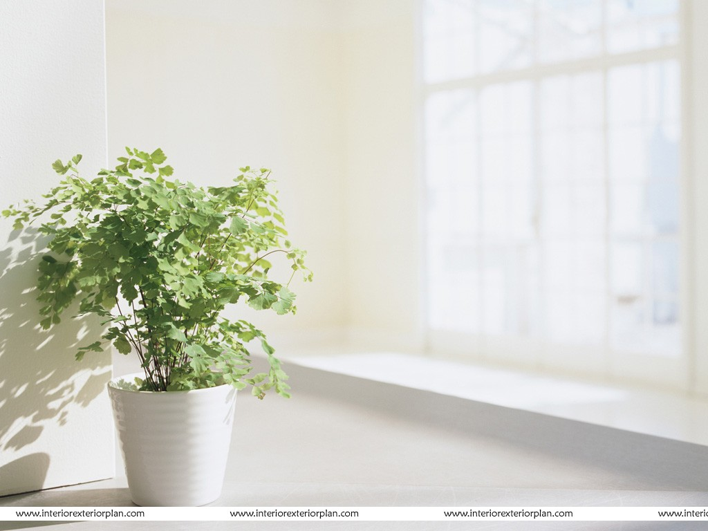 interior exterior plan a wonderful plant in a wonderful pot how to decorate your interior with green indoor plants and