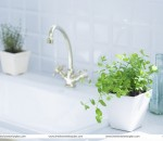 A Breath of Fresh House Interior Plants