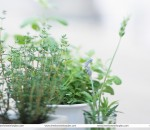 The secret of indoor gardening