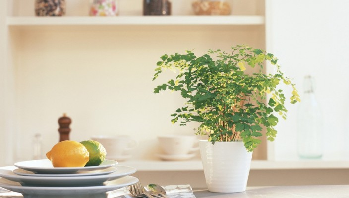 Houseplants: adding touch of greenery to your decor