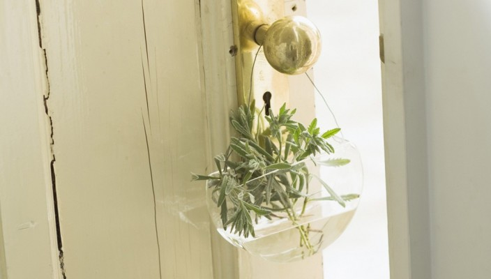 Unique indoor plant decoration idea