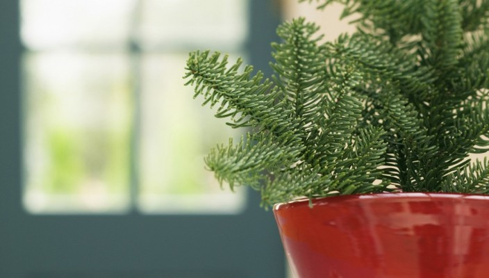 House Interior Plants: the purifying agent