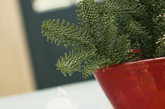House Interior plants: Symbol of elegance