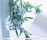Inexpensive decorations with show plants