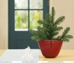 House Interior Plants: no less than a jeweler